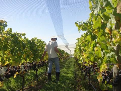 In vineyard